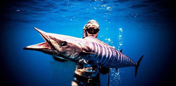 Cá thu ngàng